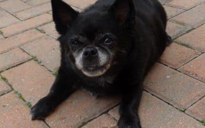 Molly : Long Term Foster  RIP