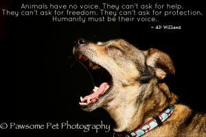 Speak Up For Animals