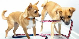 Dogs with Leash