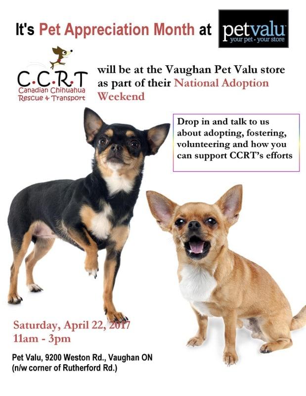 Dog Rescue Chihuahua Ottawa