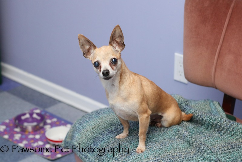 Sydney has been Adopted!