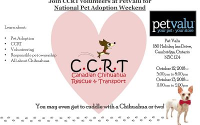 Pet Adoption Weekend Oct 12-13 : Cambridge