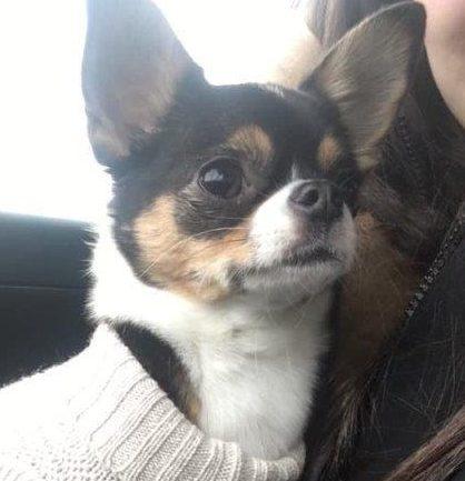 Zoe the Puppy