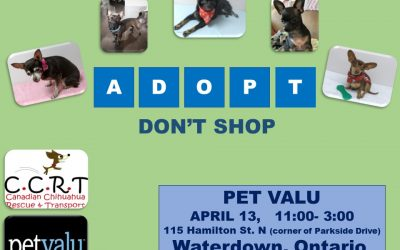 April 13, 2019 : Waterdown Pet Valu