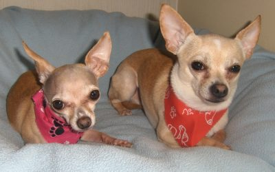 Bonded Pair: Charlie and Luna