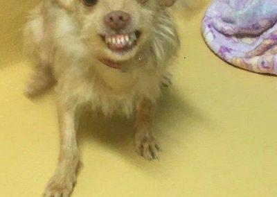 Jasper smiling