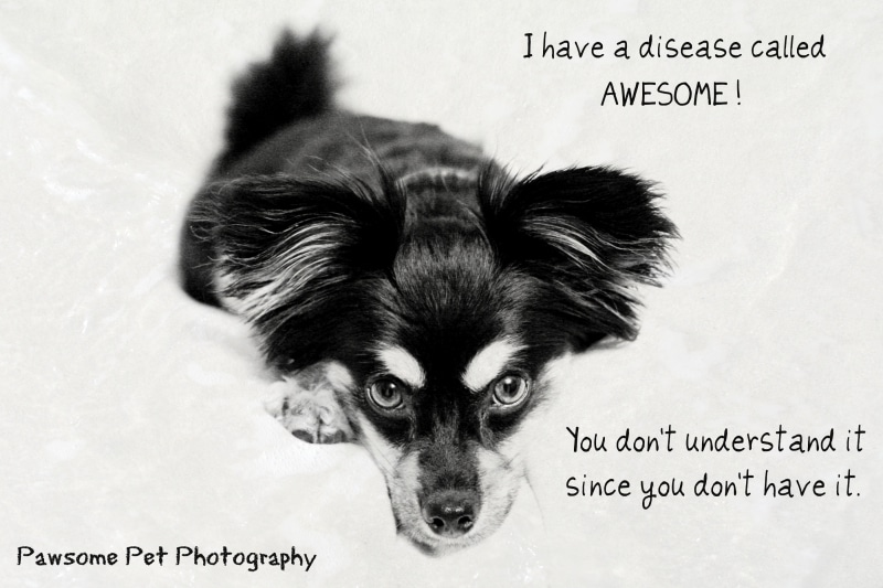 "The ""Awesome"" Disease"