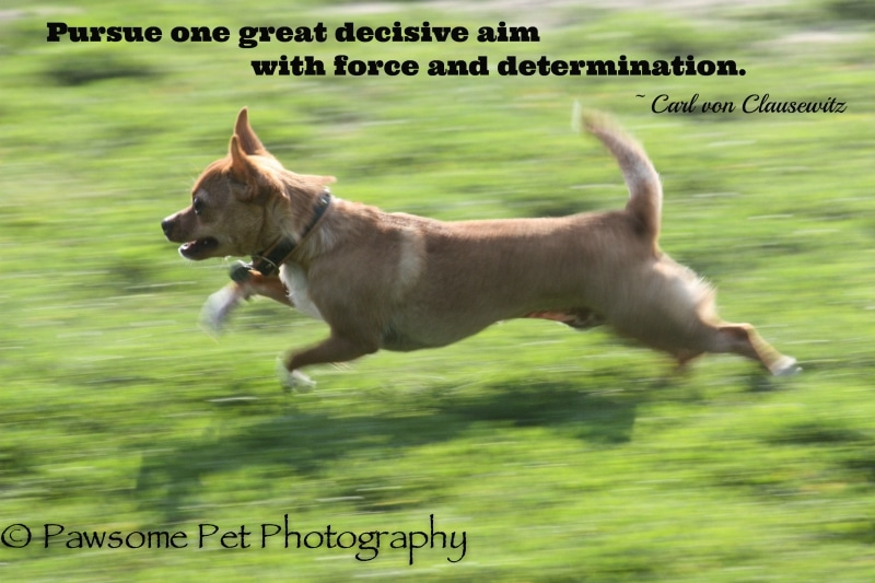Pursue One Great Aim
