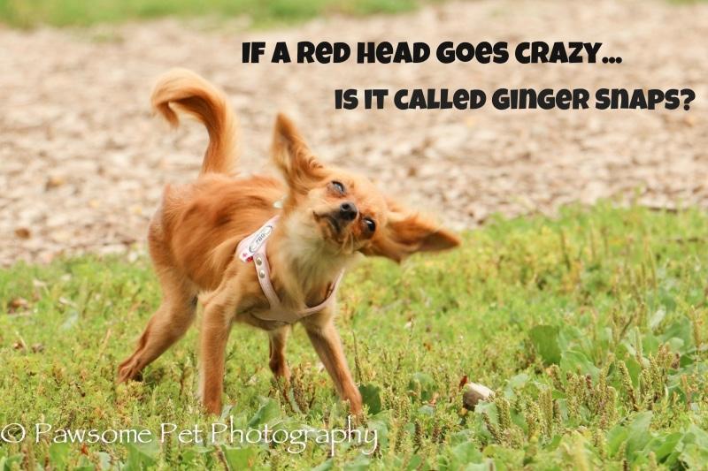 Ginger Snaps!