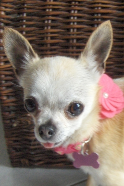 Lulu Is Living Happily Ever After!