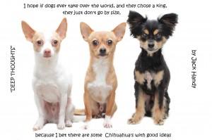 chihuahuas have ideas like kings